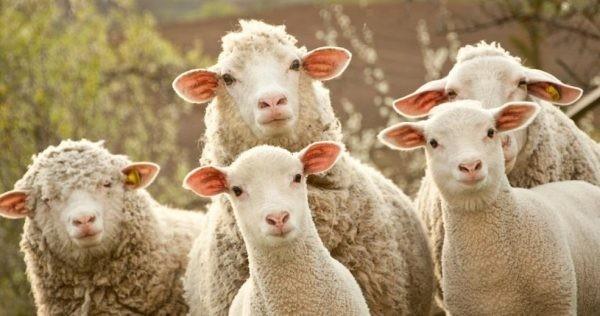 Oile din ziua noastră