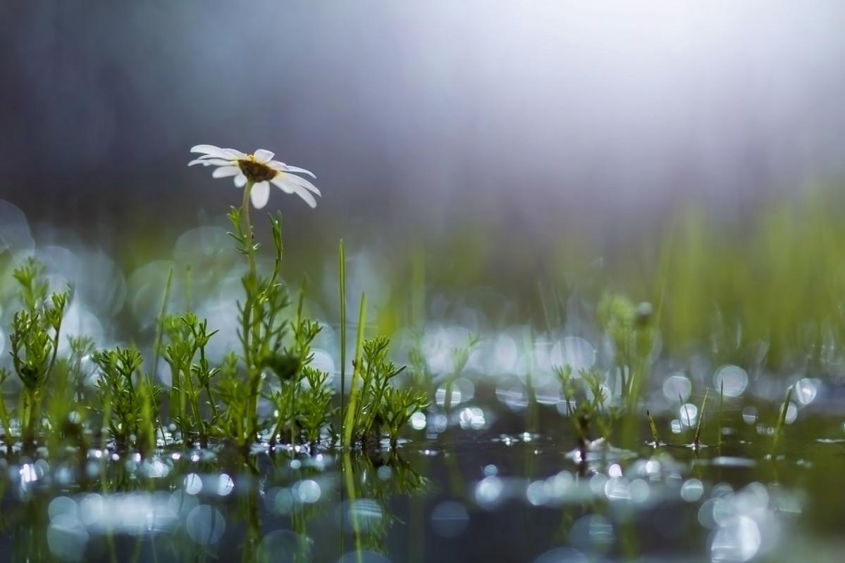 Dăruieşte Mântuitorule ploaie, pământului celui însetat…