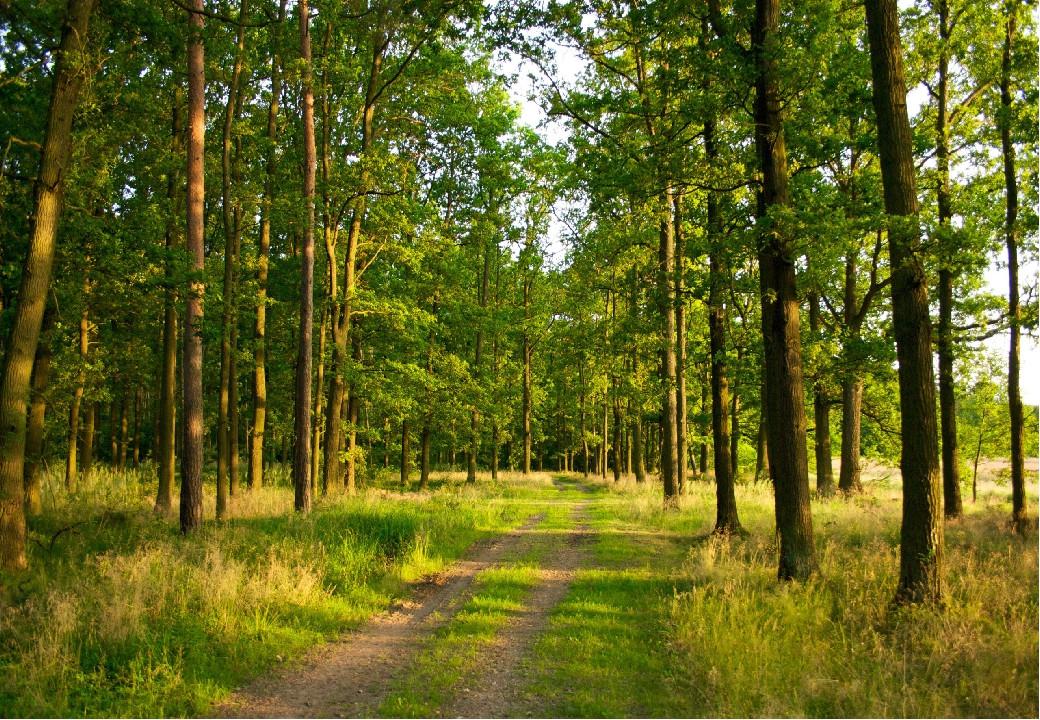 Povestea celor trei copaci
