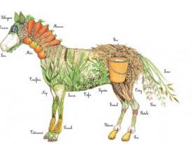 Caii. Uriasii domestici - interior 3