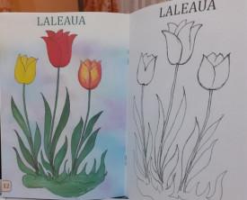 Coloram flori - interior 2
