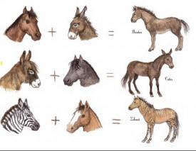 Caii. Uriasii domestici - interior 1