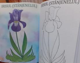 Coloram flori - interior 1