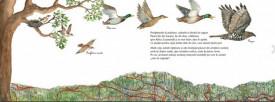 In zbor. Pasarile migratoare - interior 2