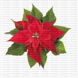 Stampo stella di natale per decorazione con la pasta di zucchero