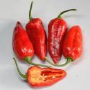 Il Terzo peperoncino più piccante al mondo!! Chili Bih Jolokia Extreme. Piccantezza:10/10++