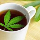 Tisana alla Cannabis. Dolce Gusto. 8 Capsule