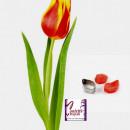Petalo Tulipano. 2 Venatori + Cutter
