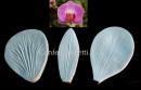 Orchidea. 3Venatori in silicone ad alta definizione
