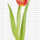 stampo silicone petalo tulipano