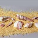 10 Conchiglie di Mare. Stampo in Silicone di alta definizione