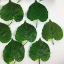 Gum Paste Verde per Fiori e foglie Decorina Vip