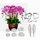 Orchidea  stampo in silicone + 3 Cutter in metallo
