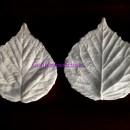 Foglia di Mora 6,5 cm. 2 Venatori in silicone