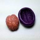 Cervello. Spettacolare stampo in silicone