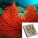 Corallo rosso. Stampo in silicone