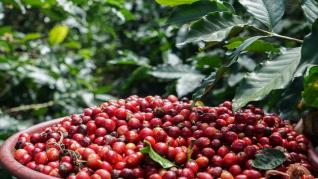 CAFELE RARE #COFFEE RARITIES