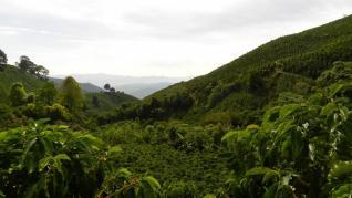 BRAZILIA cel mai mare producator de cafea mondial si putina istorie a cafelei din MOGIANA