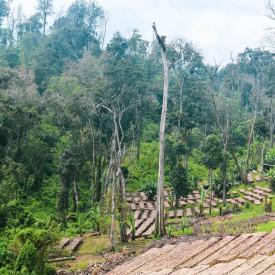 Cafea de specialitate ETHIOPIA naturala GUJI TERO FARM DIMTU PLANTATION COFFEE Arabica recolta 2021
