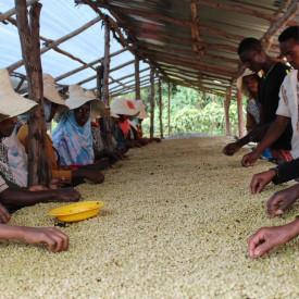 Cafea proaspat prajita specialitate ETHIOPIA BIFTU GUDINA Arabica