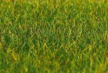 FALLER 180485 PREMIUM STROOIMATERIAAL, GRAS, DONKERGROEN, 6 MM, 30 G