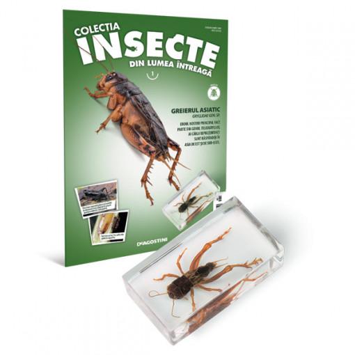 Insecte editia nr. 01 - Greierul Asiatic