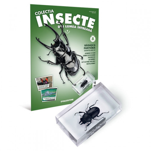 Insecte editia nr. 04 - Radasca Fantoma