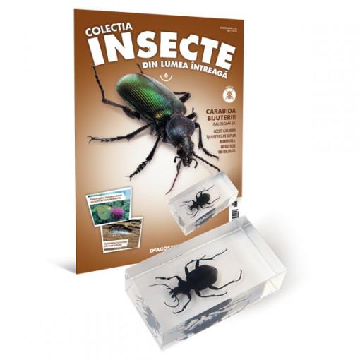 Insecte editia nr. 06 - Carabida Bijuterie