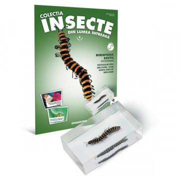 Insecte editia nr. 08 - Miriapodul Exotic