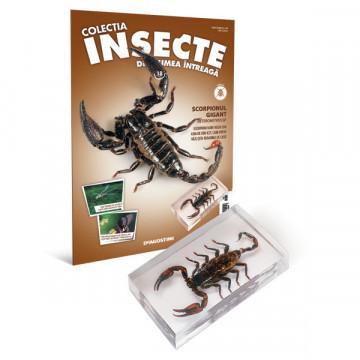 Insecte editia nr. 18 - Scorpionul gigant