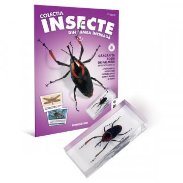 Insecte editia nr. 09 - Gargarita Rosie de Palmier