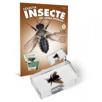 Insecte editia nr. 10 - Albina Megachilidae