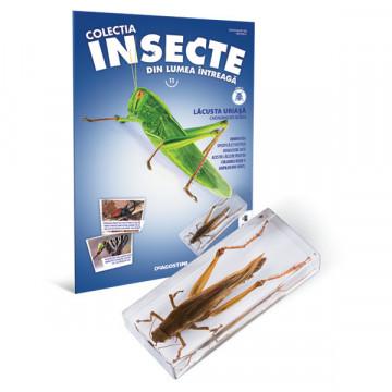 Insecte editia nr. 11 - Lacusta Uriasa