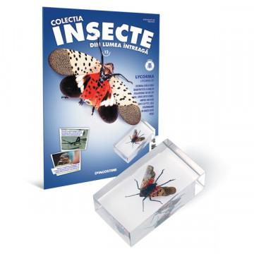 Insecte editia nr. 12 - Lycorma