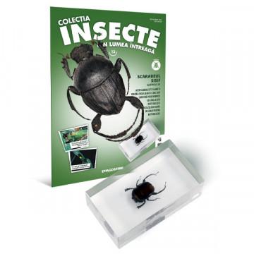 Insecte editia nr. 13 - Scarabeul Sisif