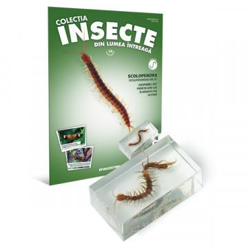 Insecte editia nr. 14 - Scolopendra