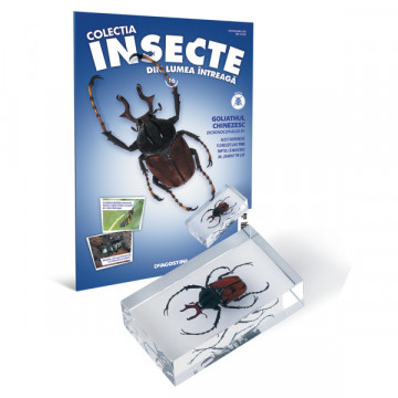 Insecte editia nr. 16 - Goliathul Chinezesc