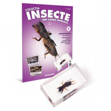 Insecte editia nr. 07 - Coropisnita