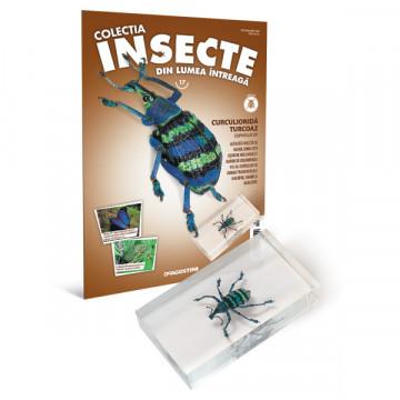 Insecte editia nr. 17 - Curculionida Turcoaz