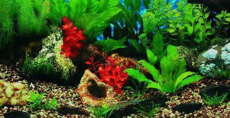 Trixie Pozadina za akvarijum,slatka / slana voda 30 cm x 15 m ( 8111 )