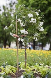 Windhager šipka 180cm plastična ( WH 05747 )