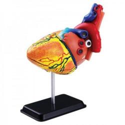 Model ljudskog srca SK009 ( 5892 )