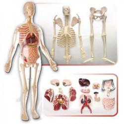 Anatomija ljudskog tela - žene MK001 ( 12909 )