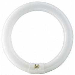 Tub Fluorescent Circular T9 / P[W]: 32