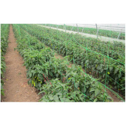 Plasa pentru Plante / C: Verde; O[mm]: 150x150; H[m]: 1.7; L[m]: 20
