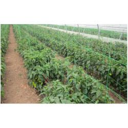 Plasa pentru Plante / C: Verde; O[mm]: 150x150; H[m]: 1.7; L[m]: 50