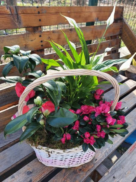 aranjament-floral-cu-Camelia-Japonica-crinul-pacii