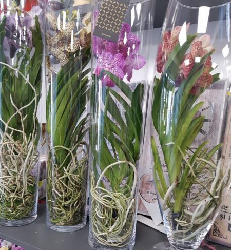orhidee-vanda-în-vas-de-sticlă