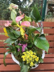 Cos cu 5 plante de interior