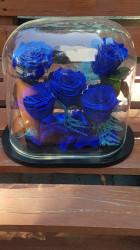 5 Trandafiri Criogenati Albastri in Cupola